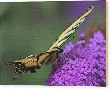 Wood Print featuring the photograph Eastern Tiger Swallowtail by Juergen Roth