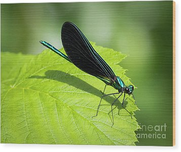 Wood Print featuring the photograph Ebony Jewelwing by Ricky L Jones