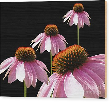 Echinacea In Half  Wood Print by Cathy  Beharriell