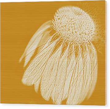 Wood Print featuring the photograph Echinacea by Linde Townsend