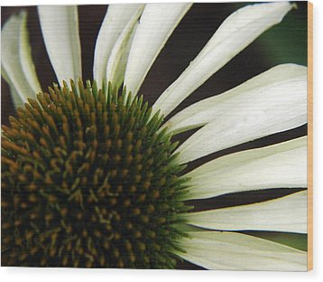 Echinacea Wood Print by Priscilla Richardson