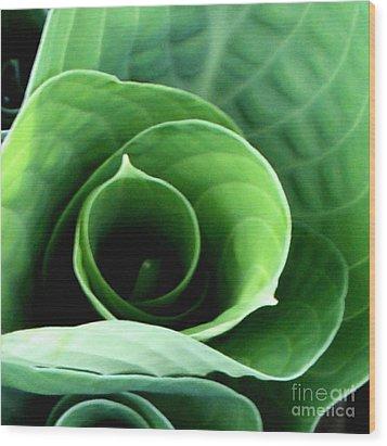 Echo II Wood Print by Valerie Fuqua