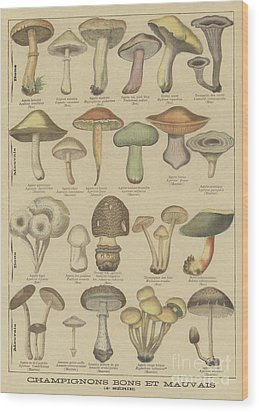 Edible And Poisonous Mushrooms Wood Print by French School