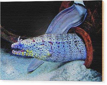 eel Wood Print by Jane Schnetlage