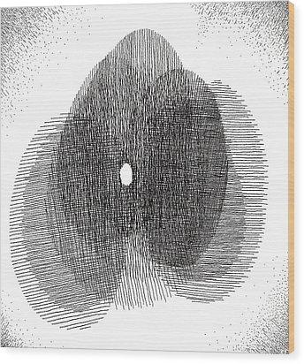 Egg Drawing 119717 Wood Print