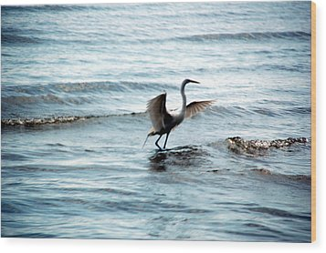 Wood Print featuring the photograph Egret At Sunset by Kathleen Stephens