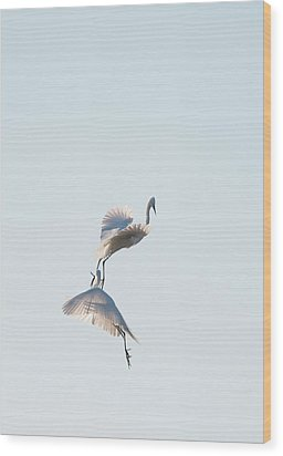 Egret Dance 2 Wood Print by Catherine Lau