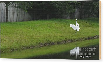 Egret Dance Wood Print by Greg Patzer