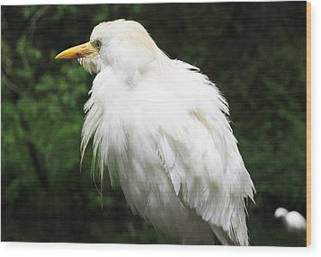 Egret Feeling Ruffled Wood Print
