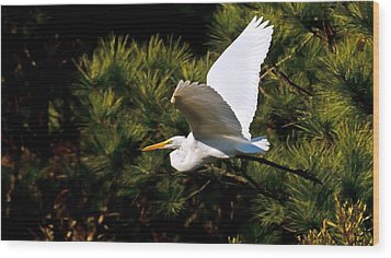 Egret In Flight 1 Wood Print by Lara Ellis