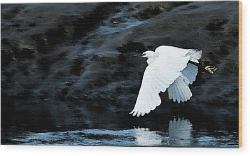 Egret In Flight Wood Print by Brian Roscorla