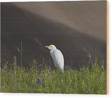 Wood Print featuring the photograph Egret In The City by Joshua House