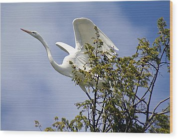 Egret On Angels Wings Wood Print
