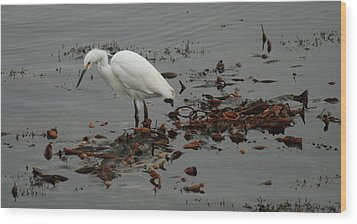 Egret On Seaweed Raft Wood Print