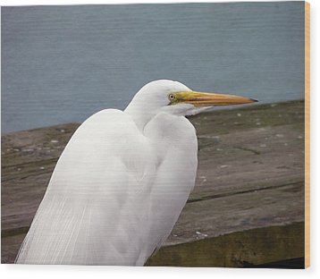 Egret On The Dock Wood Print by Al Powell Photography USA