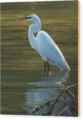Wood Print featuring the photograph Egret Resting by Kathleen Stephens