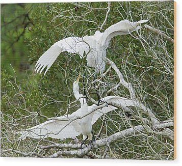 Egret Rumble Wood Print