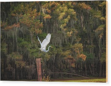 Egret Sanctuary Wood Print
