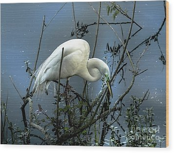 Egret Under Marina Lights Wood Print by Robert Frederick