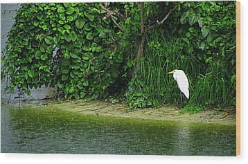 Egret Wakodahatchee Florida Wetlands Wood Print by David Mckinney
