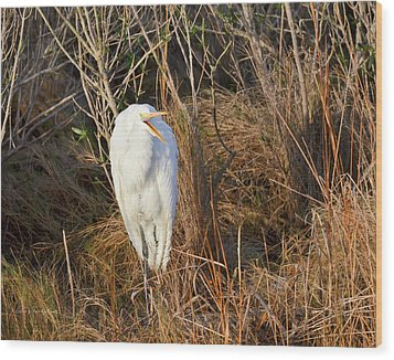 Egret With Something To Say Wood Print by George Randy Bass