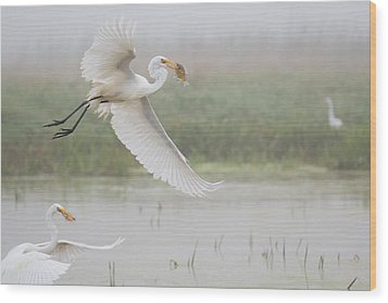 Egrets Fish Wood Print