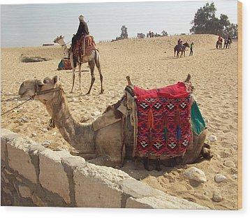 Egypt - Camel Getting Ready For The Ride Wood Print by Munir Alawi