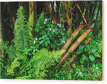 El Yunque National Forest Ferns Impatiens Bamboo Mirror Image Wood Print by Thomas R Fletcher