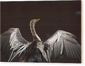 Elegant Anhinga Wood Print