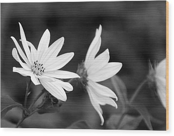 Elegant Asters Wood Print