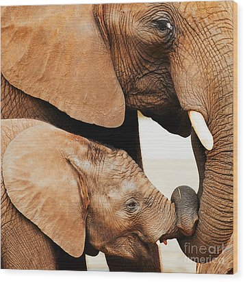 Elephant Calf And Mother Close Together Wood Print