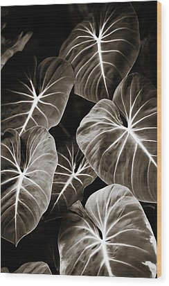Elephant Ears On Parade Wood Print by Marilyn Hunt