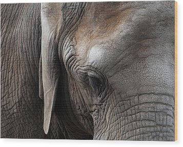 Elephant Eye Wood Print