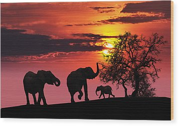 Elephant Family At Sunset Wood Print by Jaroslaw Grudzinski