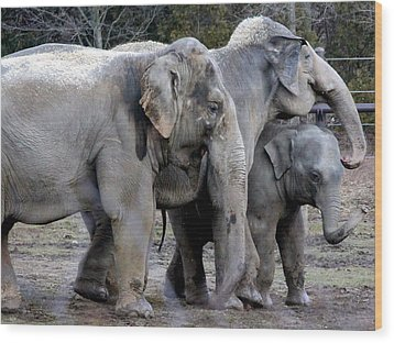 Elephant Family Wood Print by Laurel Talabere
