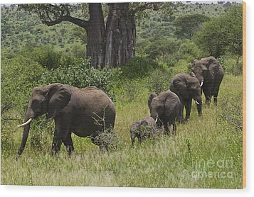 Elephant Family Tarangire Np Wood Print by Craig Lovell