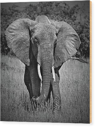 Wood Print featuring the photograph Elephant In Amboseli by Antonio Jorge Nunes