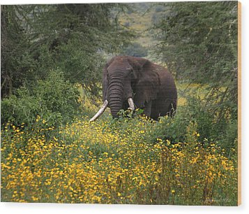 Elephant Of The Crater Wood Print by Joseph G Holland