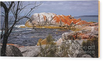 Elephant Rock - Bay Of Fires Wood Print by Lexa Harpell