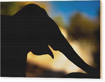 Elephant Silhouette Wood Print by Ralph Vazquez