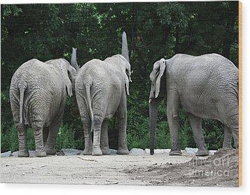 Elephant Trio Wood Print by Karol Livote