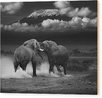 Elephant Tussle Wood Print