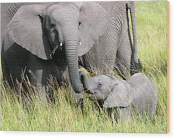 Elephants - Little Sister Wood Print by Nancy D Hall