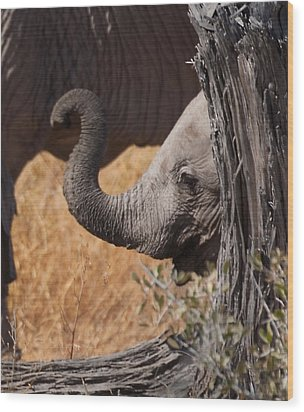 Elephants - Shy Baby Wood Print by Nancy D Hall
