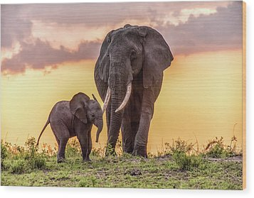 Elephants At Sunset Wood Print by Janis Knight