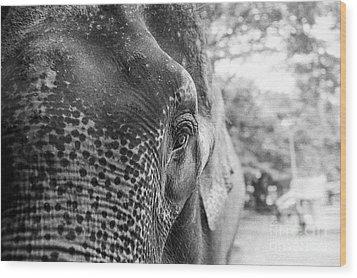 Elephant's Eye Wood Print by Dean Harte
