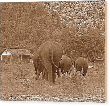 Wood Print featuring the photograph Elephants II by Louise Fahy