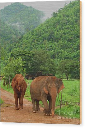 Wood Print featuring the photograph Elephants by Louise Fahy