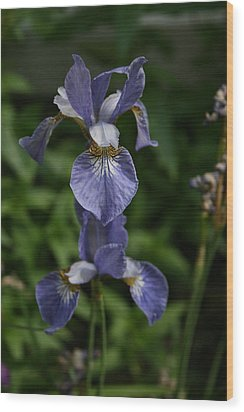 Elevated Iris Wood Print by Alan Rutherford