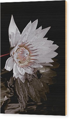Elizabeth's Lily Wood Print by Trish Tritz